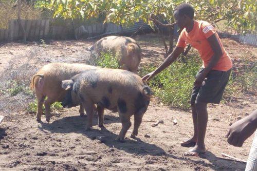 School farm 3